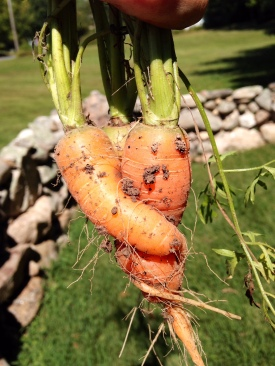hugging carrots