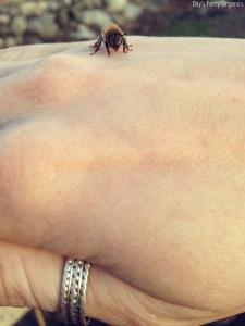 A friendly worker bee
