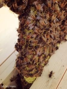 Healthy comb, healthy hive