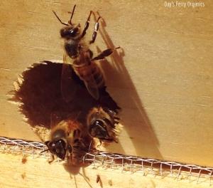 Bees at a hive entrance.