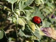 ladybug_430