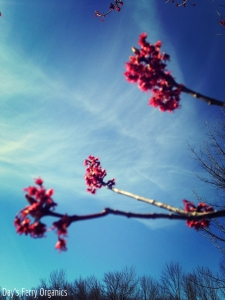 Trees are an excellent source of early spring pollen and nectar.