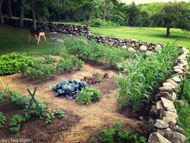 The garden in it's full bounty.
